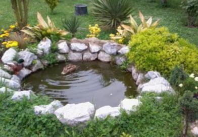 Süs Havuzu : Hobi Bahçelerinin Vazgeçilmezi…