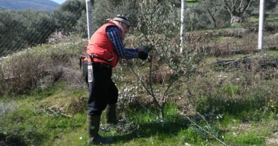 Ağaç budama : 2019 Şubat Tüm Ağaçlarımız Budandı!