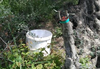 Bahçemize Bahar Geldi… Meyve Fidanı Aşısı ve Daha Fazlası!