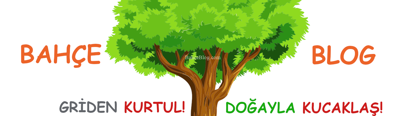 Bahçe Blog | Hobi Bahçesi – Konteyner Ev – Ceviz – Zeytin